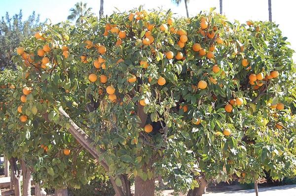 Fruktträden är ljuvliga!
