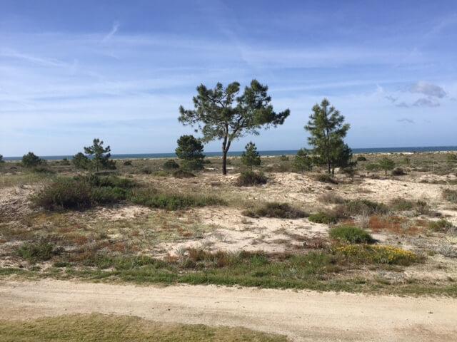 En härlig dag på Troia golfbana med den blåa Atlanten längs banan.