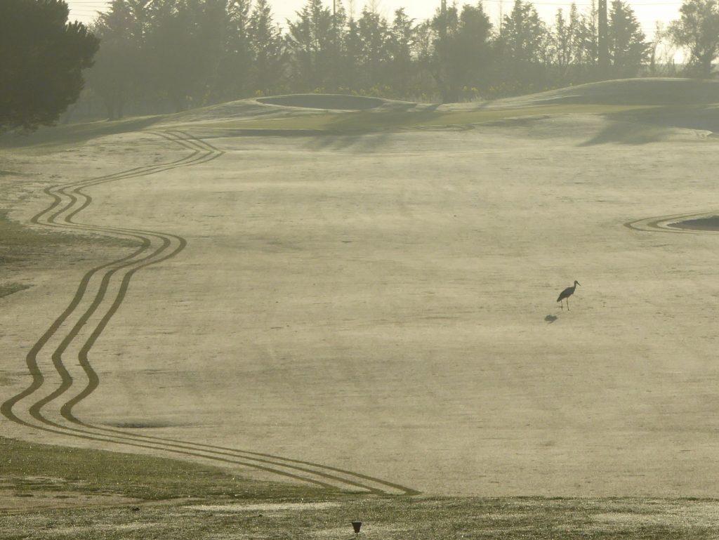 Storkar är roligare än golfspelare
